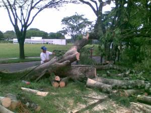 Os funcionários da UEL já trabalhavam na remoção das árvores derrubadas