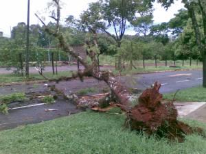A queda de árvores foi a principal consequência da tempestade
