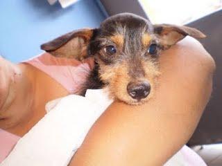A cachorrinha só não morreu porque foi resgatada pelo GAP/PR